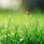 Hoe je die mooie groene tuin krijgt
